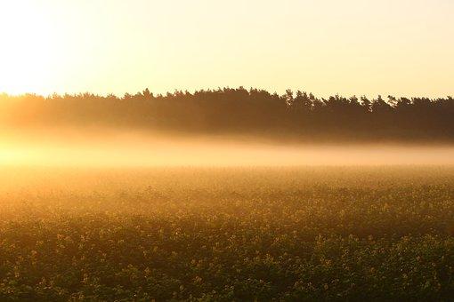 Fog, Sunrise, Field, Meadow, Nature, Light, Mood
