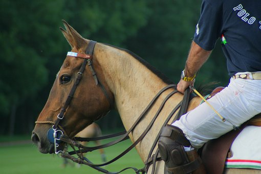 Horse, Equine, Polo, Rider, Man, Sports, Close-up
