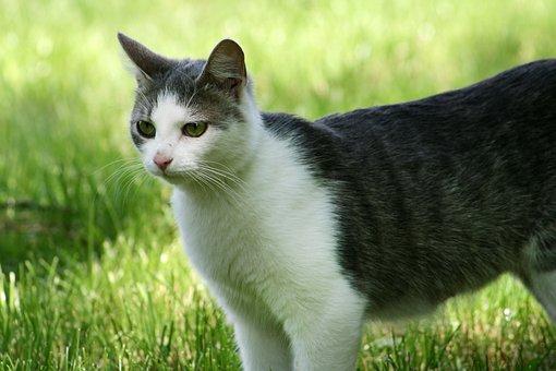 Cat, Stray, Field, Meadow, Ferrets, Animal, Kitten