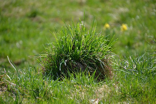 Grass, Green, Meadow, Grassy Knoll