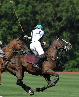 Polo, Man, Player, Horses, Sports, Competition