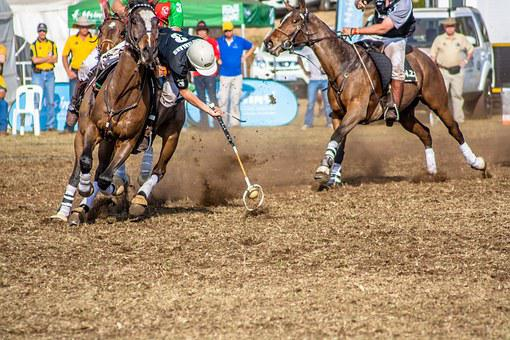 Sport, Polo Cross, Horse, Hobby, Polo, Competition
