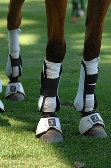 Horse, Legs, Polo, Sports, Protection, Macro, Close-up