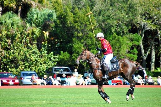 Polo, Polo Horse, Sport, Horse, Rider, Player, Riding