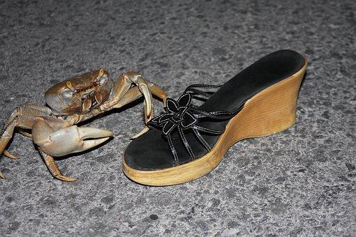 Crab, Funny, Wildlife, Resort, Claw, Shore, Fauna