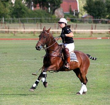 Polo, Horse, Animals, Sports, Equestrian, Horses, Ride