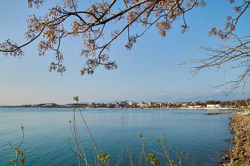Harbor Views, Tree At Harbor, Tree At The Beach