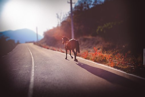 Horse, Road, Sun, Alone, Animal
