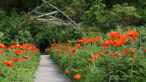 Poppy, Garden Design, Away, Decoration, English Garden