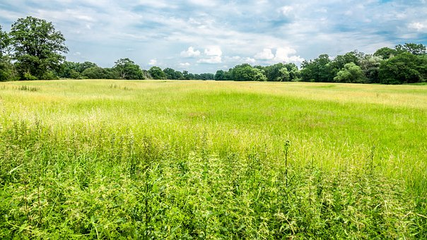 Grassland, Meadow, Grass, Nature, Summer