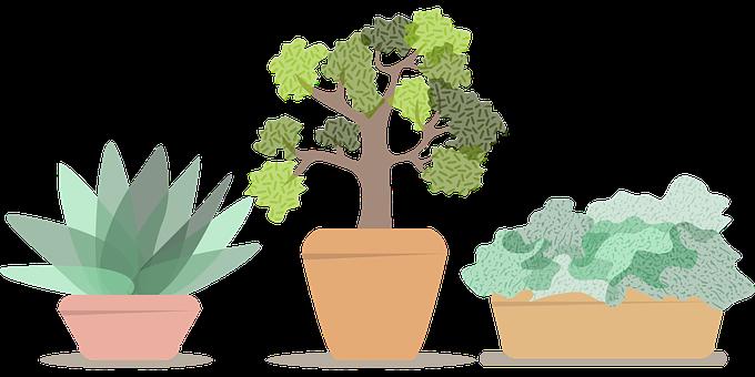 Flowerpot, Pots, Plant, Plants, House, Green, Gardening