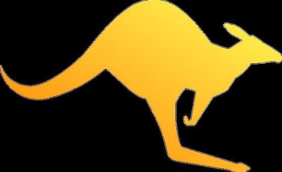 Kangaroo, Marsupial, Animal, Australian
