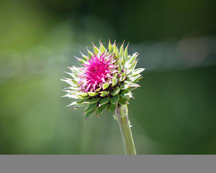 Flower, Wildflower, Nature, Bloom, Spring, Blossom
