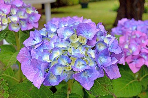 Flower, Violet, Lila, Purple, Plant, Bloom, Garden