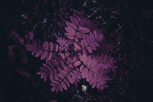 Leaf, Violet, Flowers, Nature, Purple