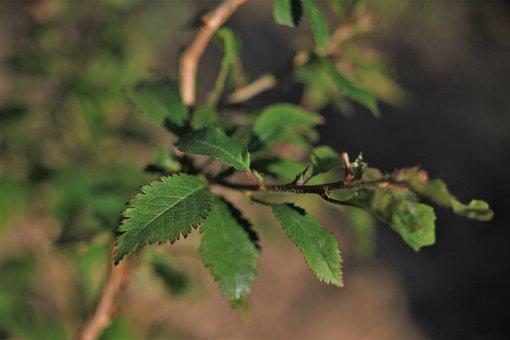 Leaves, Branch, Green, Garden, Plant, Flower, Nature