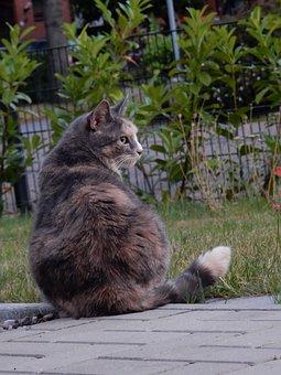 Cat, Garden, Domestic Cat, Pet