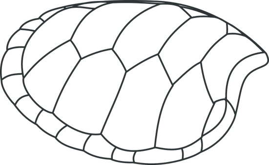 Turtle, Shell, Patterns, Black And White, Tortoise