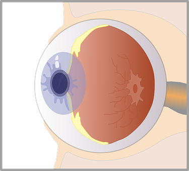 Eye, Diagram, Biology, Sight, Unlabeled