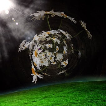 Meadow, Nature, Blade Of Grass, Flowers, Green, Grass