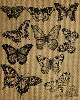 Vintage, Butterflies, Burlap, Black