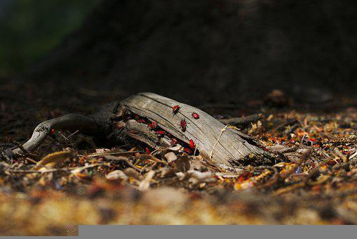 Fire Bugs, Branch, Ground, Wood