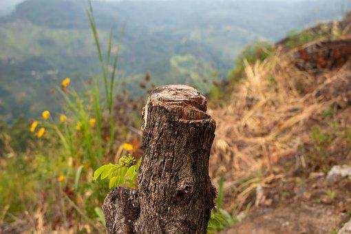 Log, Wood, Wilderness, Tree, Forest