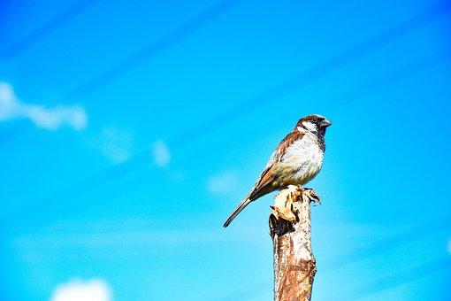 Bird, Sky, Blue, Small, Cloudy, Freedom, Nature, Sunset