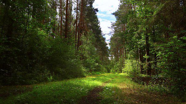 Forest Path, Summer, Away, Forest, Green, Trees, Walk