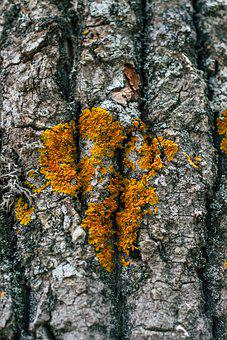 Texture, Tree, Wood, Pattern