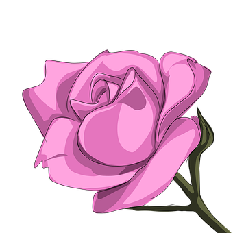 Rose, Flower, Bunga, Pink, Nature