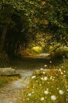 Forest, Colorfull, Landscape, Foliage