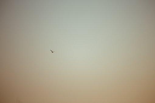 Seagull, Minimal, Flying, Sky, Gull, In
