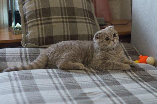 Cat, Grey, Animals, Kitten, Eyes, Feline, Cute, Fur