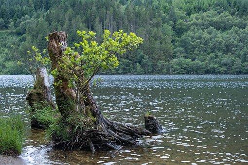Scotland, Loch Eck, Loch, Water, Nature