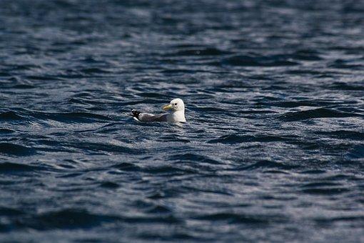 Mew, Seagull, Lake, Bird, Plumage, Blue, Surf, Finnish