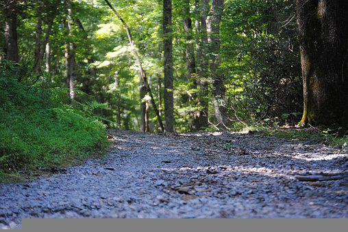 Road, Gravel, Nature, Woods