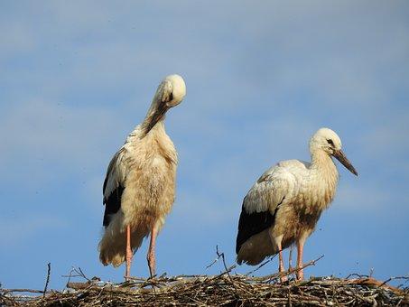 Stork, Bird, Socket, Birds, Animals