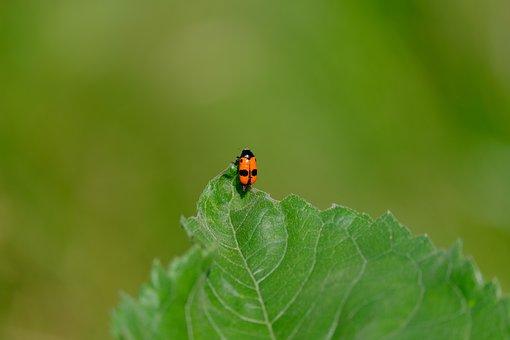 Beetle, Ants Bag Of Beetles, Ants-a Leaf Beetle