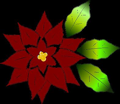 Good Night, Red, Vector, Christmas Flower