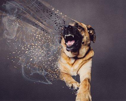 Double Exposure, Dog, Angry, Moody