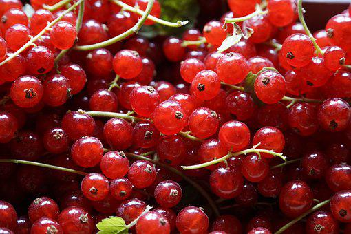 Summer, Sunshine, Berries, Red, Currant, Harvest