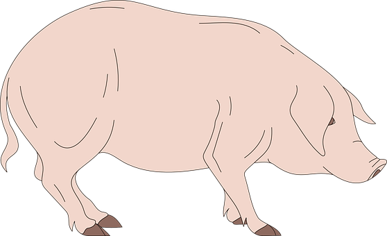 Barn, Pig, Side, View, Standing, Animal