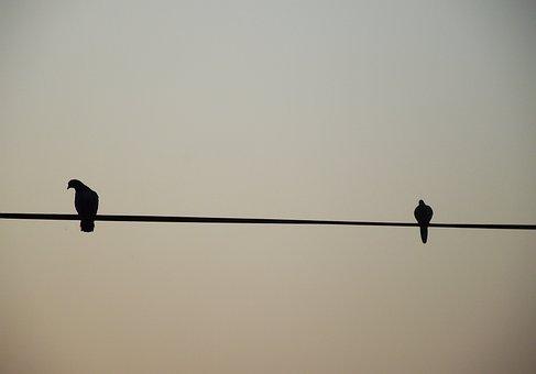 Birds, Black, Sad, Alone, Together, Life, Unique