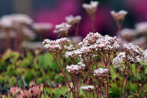 Flower, Flowers, Spring, Summer, Nature, Garden, White