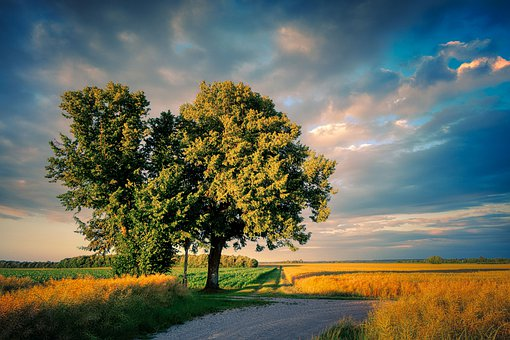 Tree, Away, Landscape, Nature, Meadow