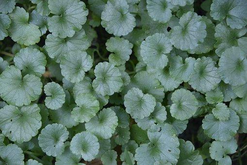 Plant, Garden, Flora, Petals, Environment, Leaf, Floral