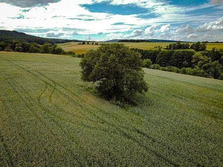 Tree, Nature, Green, Field, Meadow, Clouds, Horizon