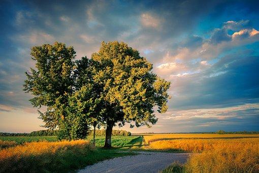 Tree, Away, Landscape, Nature, Meadow, Light, Trail