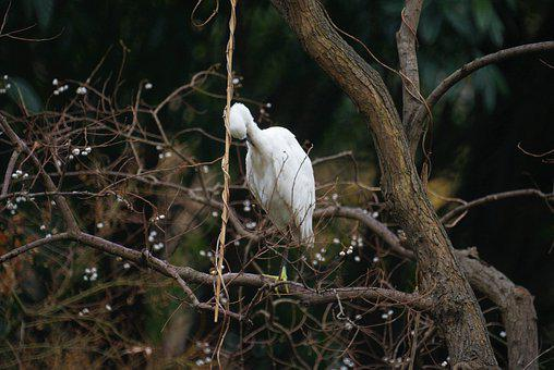 Bird, Natural, Animal, Ecology, Wildlife